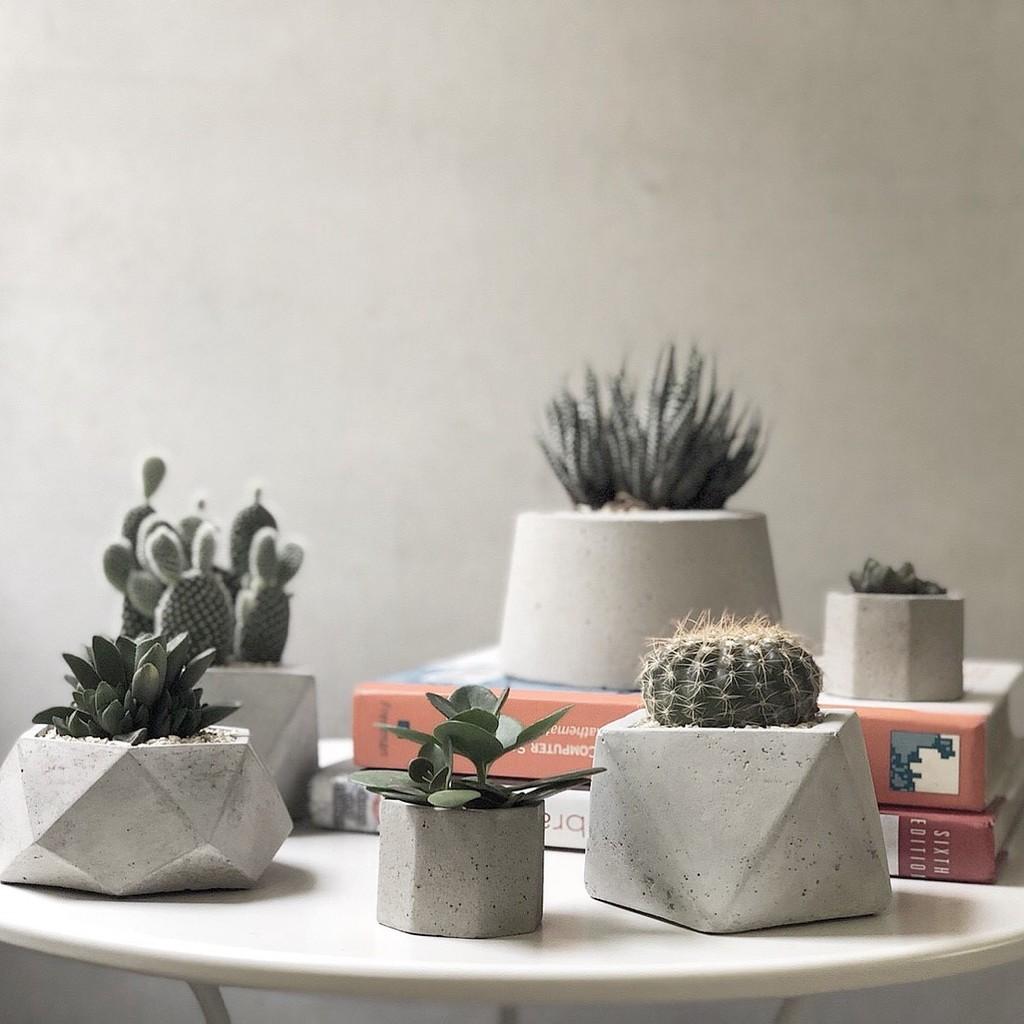 多肉植物-水泥花器