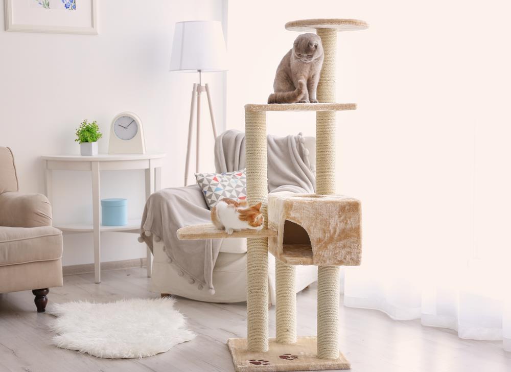 貓跳台推薦 | MOMOCAT、HAGEN、IRIS 三大 PTT 好評實木貓家具比較