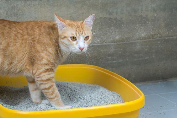 【貓砂盆怎麼選?】人氣推薦 IRIS 貓砂盆大評比,單雙層貓砂盆評價總整理!