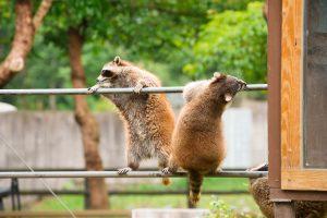 兆豐農場動物園