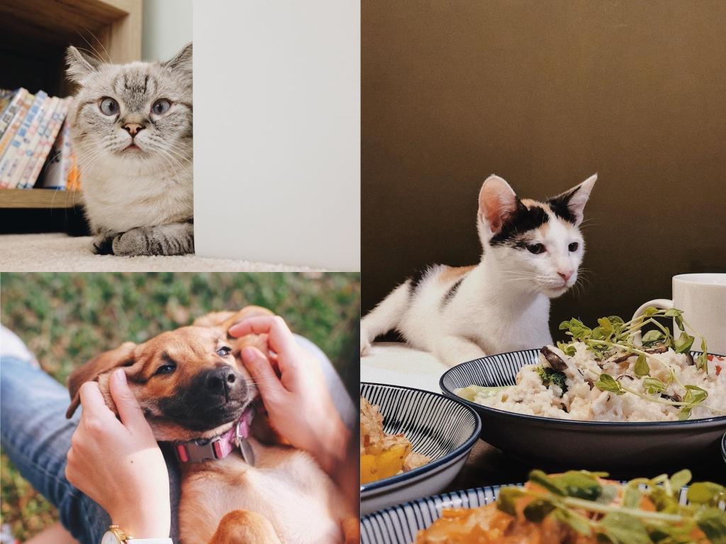台北寵物餐廳/咖啡廳 (浪浪別哭、FUFUCatCafe、Toast Cat、貓泰泰) 地圖,帶毛小孩去吃喝玩樂吧