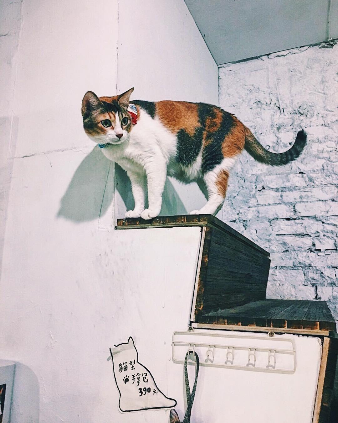 Toast cat