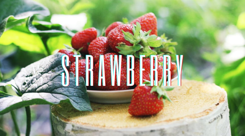 北部採草莓