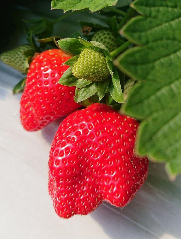 莓圃休閒農園餐廳