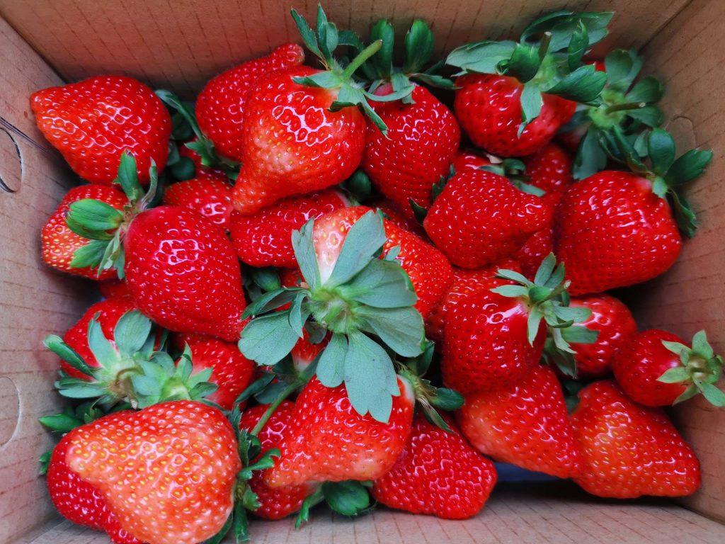 關西草莓園推薦