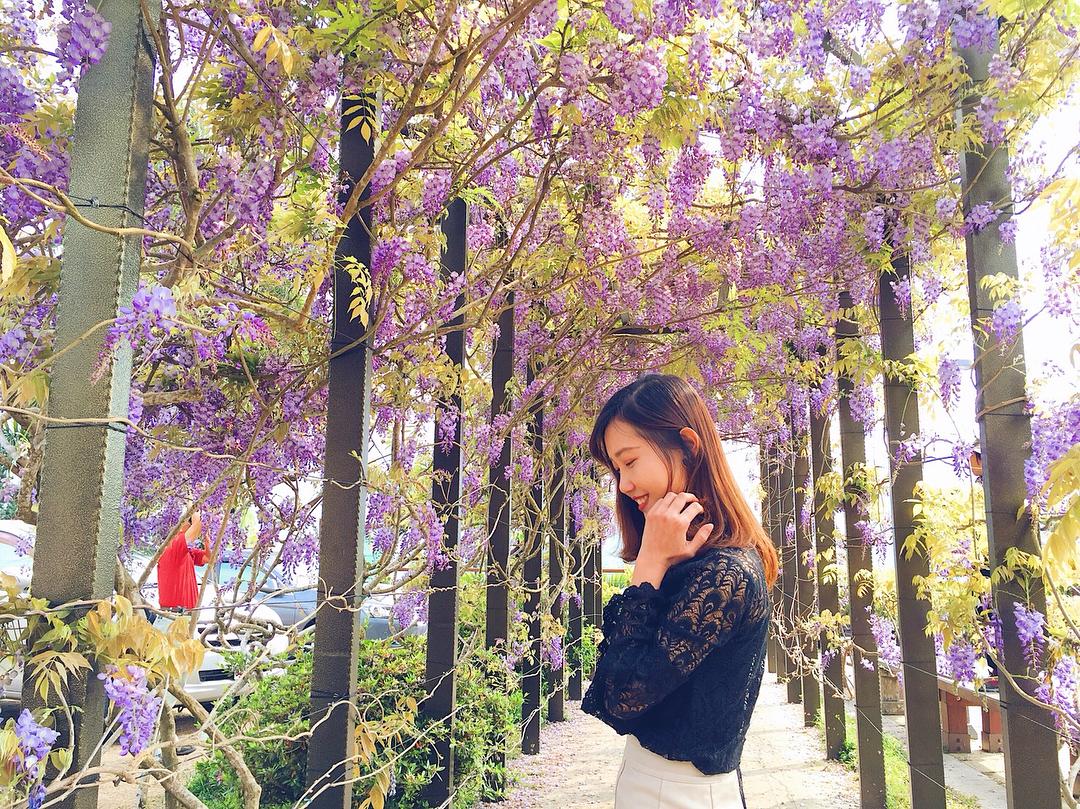 嘉義瑞里紫藤花