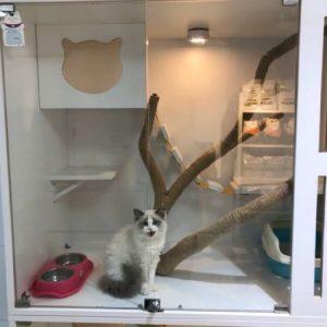 線上寵物展-寵物住宿