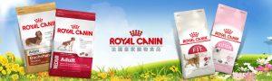 線上寵物展-法國皇家