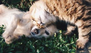 線上寵物展-寵物溝通