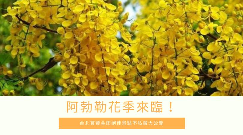 2020 阿勃勒花季 台北賞阿勃勒黃金雨5大絕佳景點,不私藏大公開!