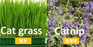 貓草和貓薄荷