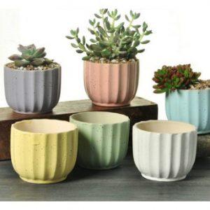 多肉植物-彩色陶瓷花器