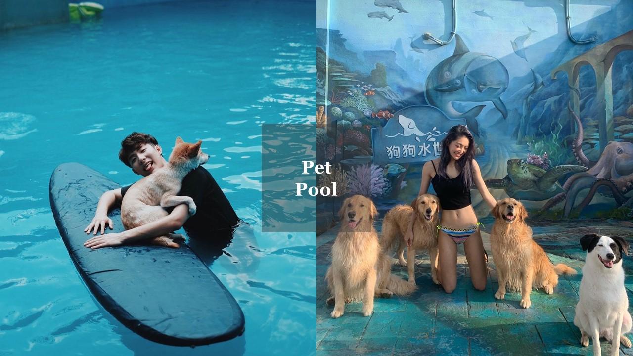 全台寵物遊樂園總整理 假日帶毛小孩遛達的好去處