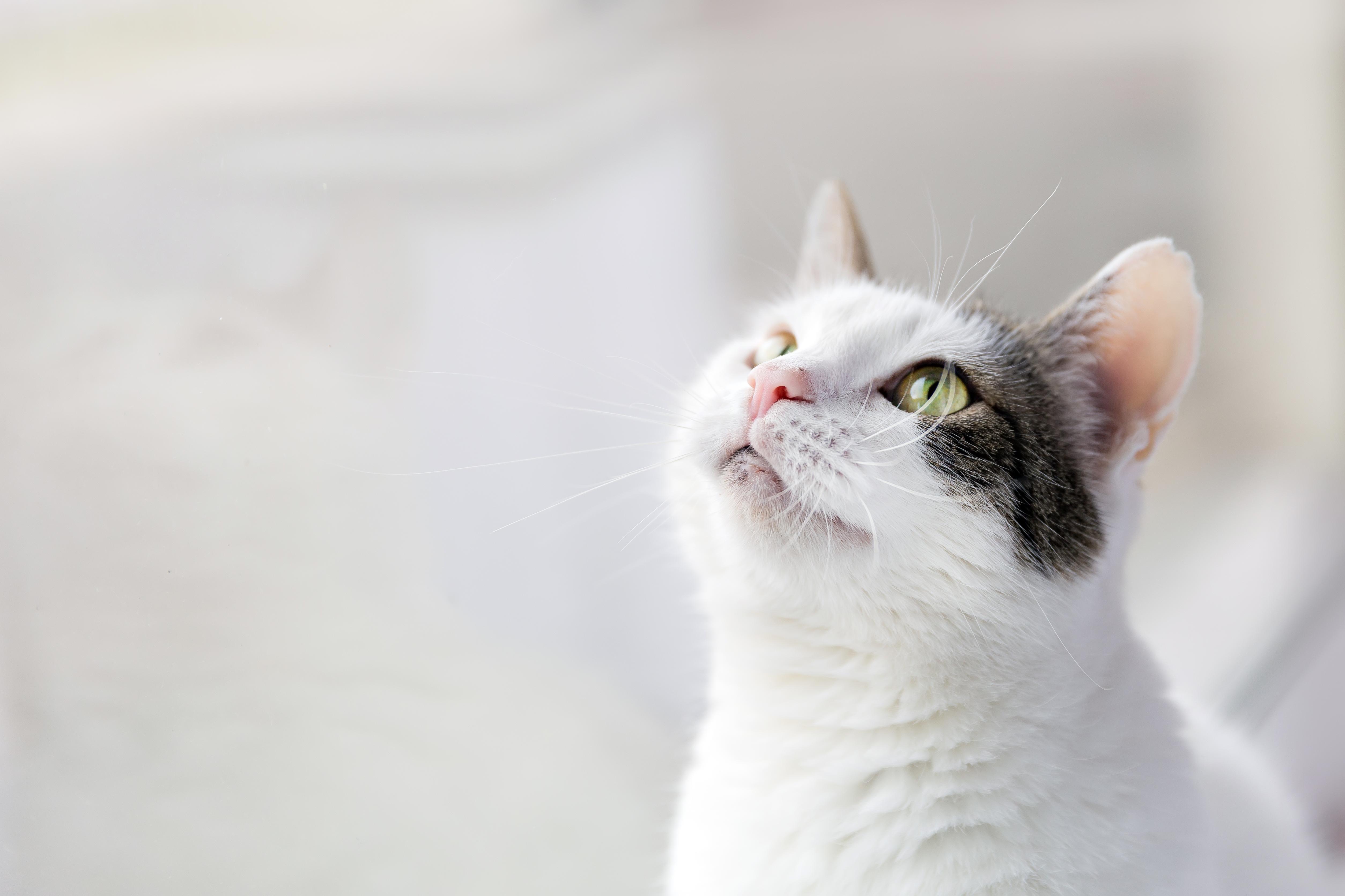 貓咪 濕食 乾食 生食