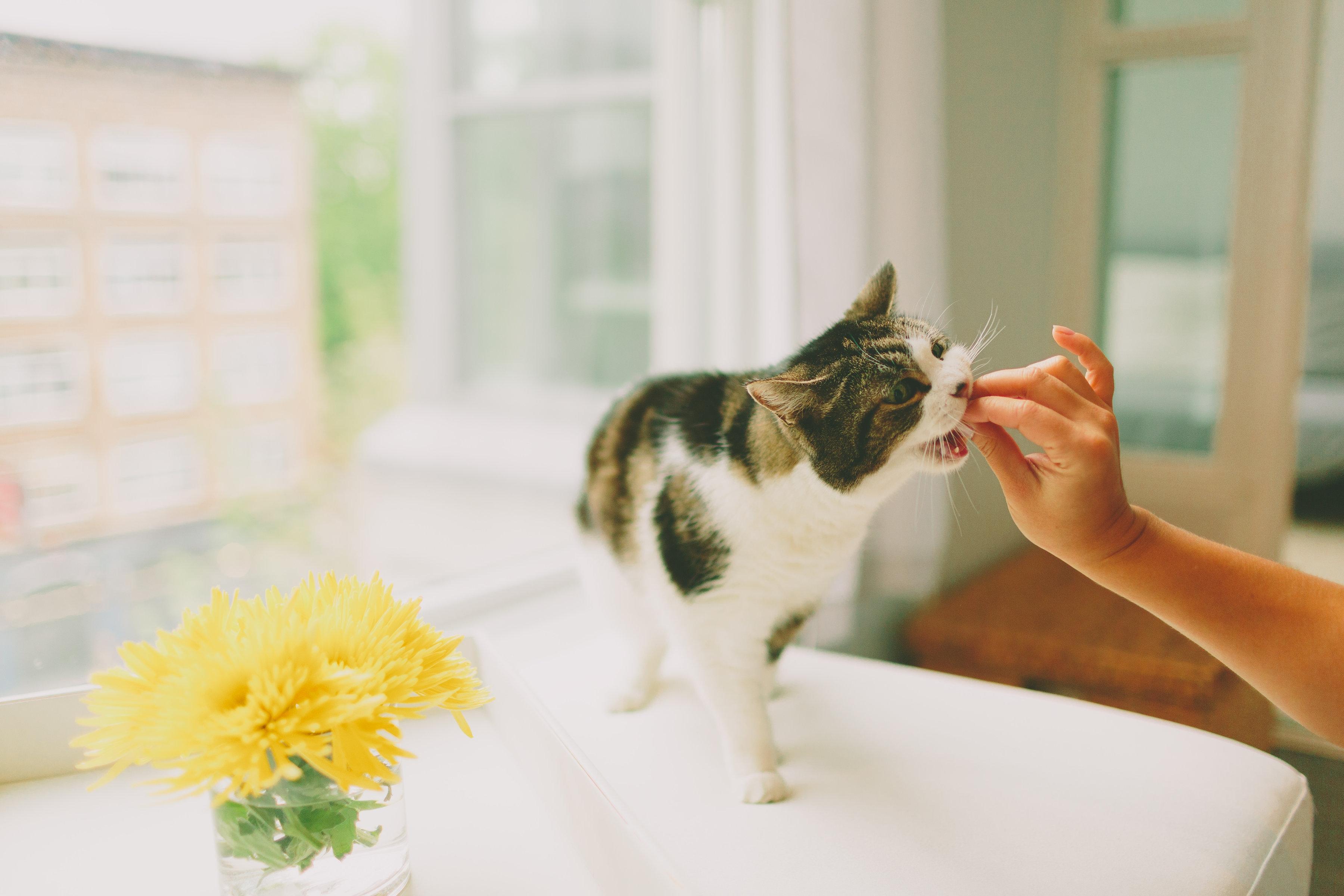 貓咪怎麼餵